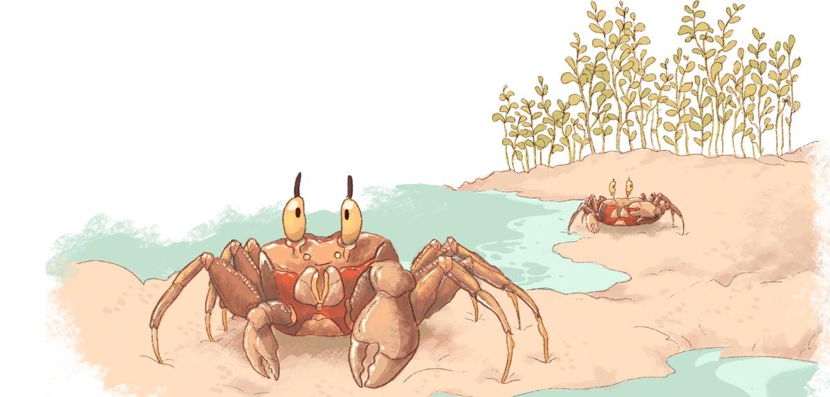 Truyện thai giáo tiếng Anh (Thai giáo ngoại ngữ): The two crabs - Tiếng Anh (có dịch)