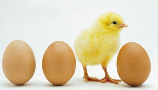 Thơ thai giáo: Gà con và quả trứng