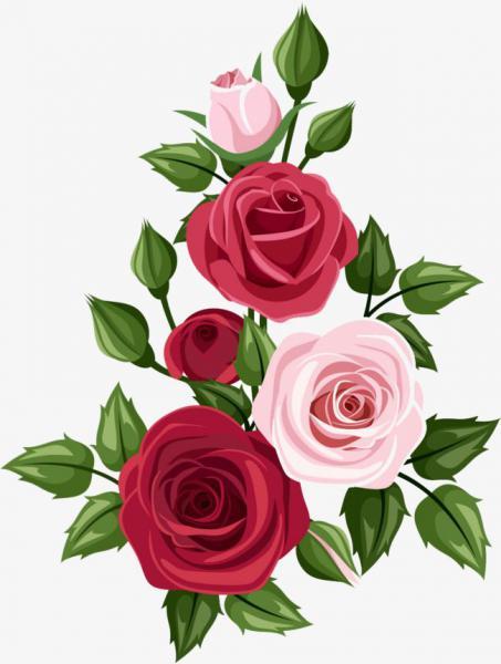 Hoa hồng đơn và hoa hồng kép