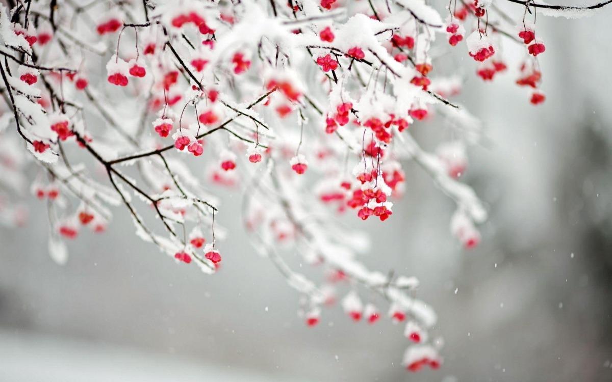 Truyện thai giáo: Hoa mai và hoa tuyết