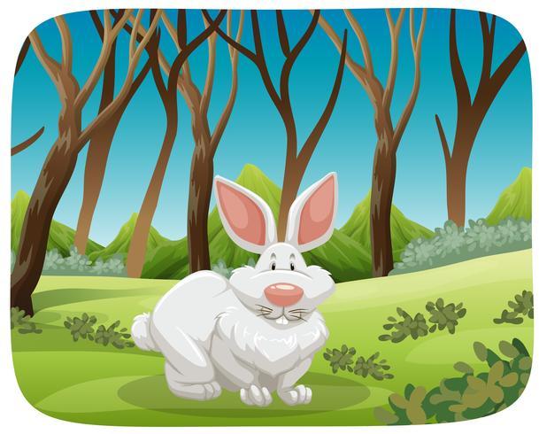 Truyện thai giáo: Thỏ trắng kiêu ngạo