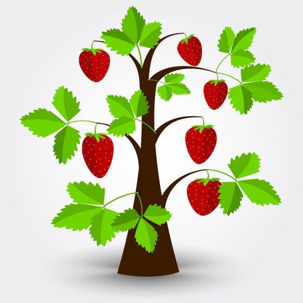 Truyện thai giáo: Quả dâu tây chín đỏ