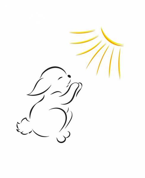 Thỏ trắng thích ánh nắng